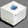 Amnesia til Macintosh